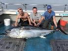 366 lb Bluefin Tuna by Unknown