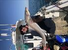 12 lb 7 oz Smooth-hound (Common) by Garth
